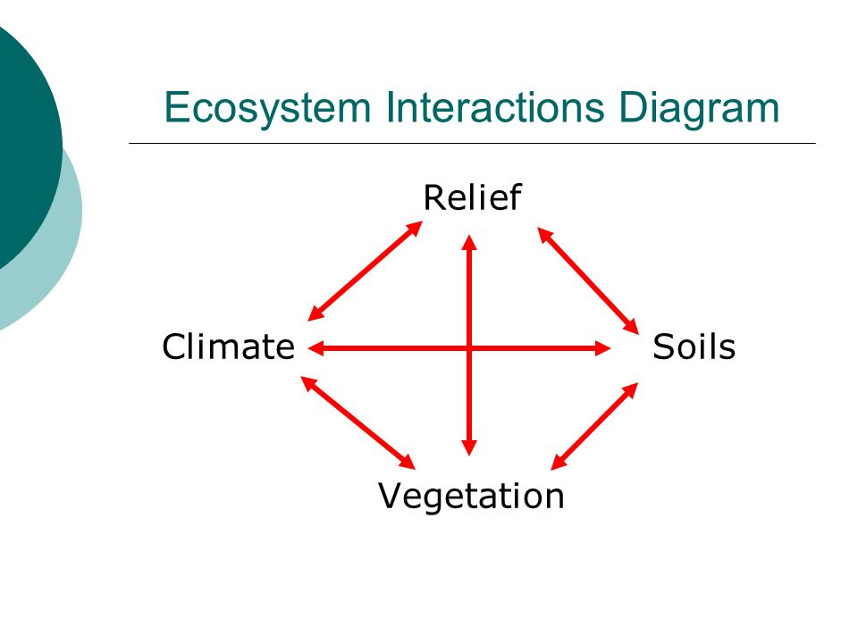 Ecosystem Interactions Diagram Relief ClimateSoils Vegetation