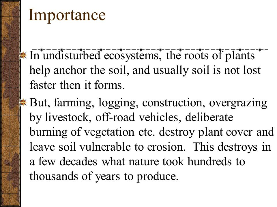Importance In undisturbed ecosystems, the roots of plants help anchor the soil, and usually soil is not lost faster then it forms.