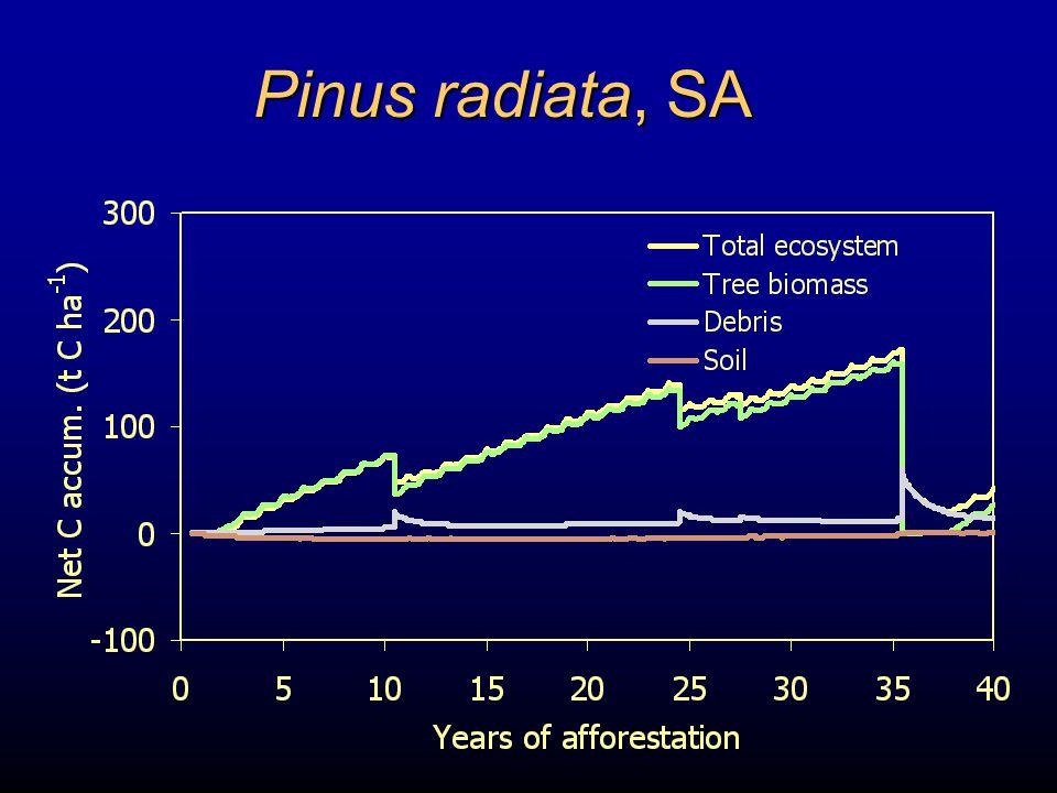 Pinus radiata, SA