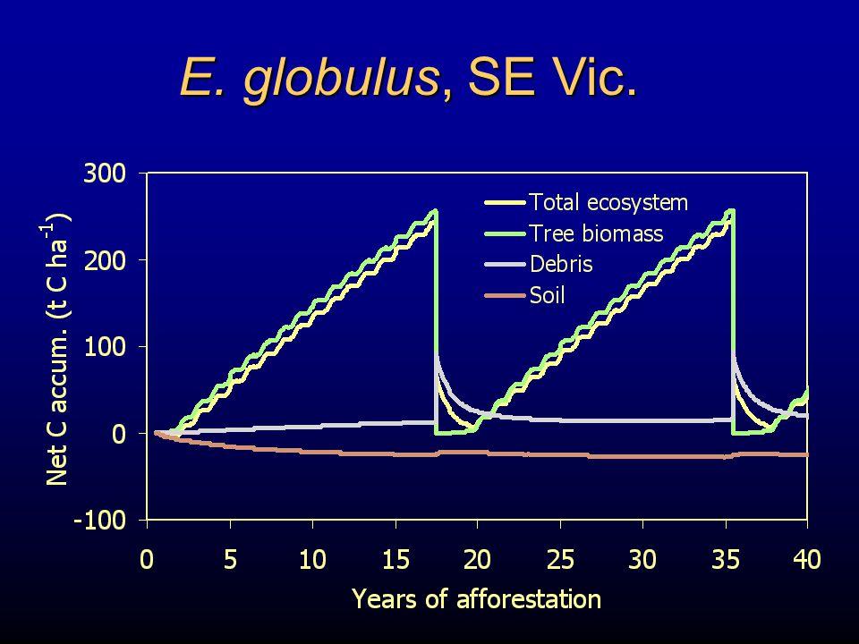 E. globulus, SE Vic.