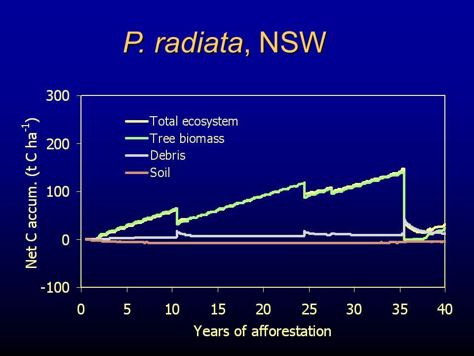 P. radiata, NSW