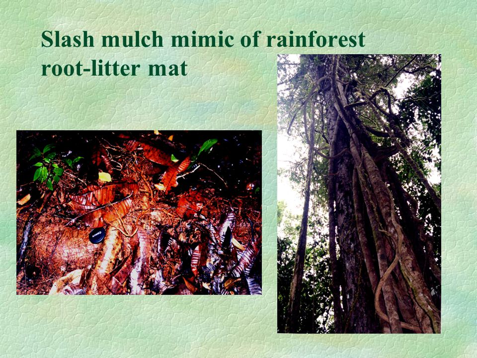 Slash mulch mimic of rainforest root-litter mat