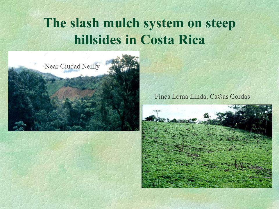 The slash mulch system on steep hillsides in Costa Rica Near Ciudad Neilly Finca Loma Linda, Ca  as Gordas