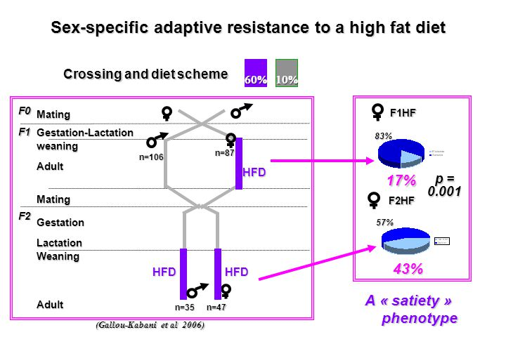 F0 F1 F2 Mating weaning Adult Mating Gestation Lactation Weaning Adult Gestation-Lactation Crossing and diet scheme Sex-specific adaptive resistance t