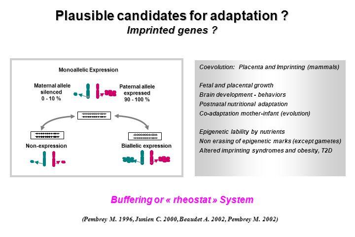 Buffering or « rheostat » System (Pembrey M. 1996, Junien C. 2000, Beaudet A. 2002, Pembrey M. 2002) Coevolution: Placenta and Imprinting (mammals) Fe