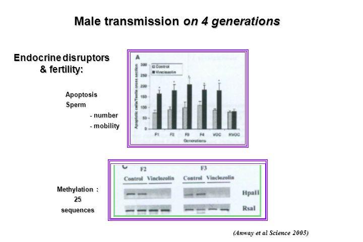 ApoptosisSperm - number - mobility (Anway et al Science 2005) Endocrine disruptors & fertility: Methylation : 25 sequences Male transmission on 4 gene