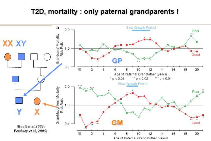 T2D, mortality : only paternal grandparents ! (Kaati et al 2002) (Kaati et al 2002; Pembrey et al, 2005) XX XY XY GP GM