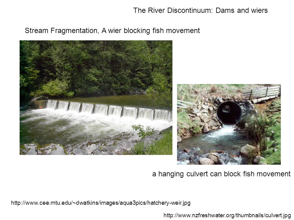 Stream Fragmentation, A wier blocking fish movement a hanging culvert can block fish movement http://www.nzfreshwater.org/thumbnails/culvert.jpg http://www.cee.mtu.edu/~dwatkins/images/aqua3pics/hatchery-weir.jpg The River Discontinuum: Dams and wiers