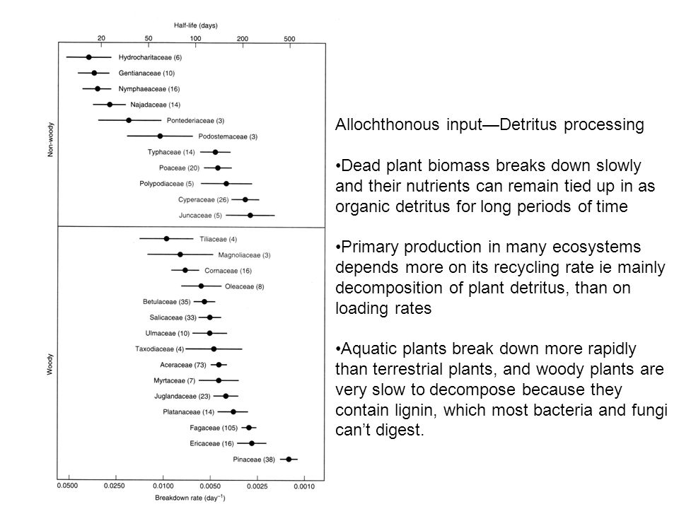 Allochthonous input—Detritus processing Dead plant biomass breaks down slowly and their nutrients can remain tied up in as organic detritus for long periods of time Primary production in many ecosystems depends more on its recycling rate ie mainly decomposition of plant detritus, than on loading rates Aquatic plants break down more rapidly than terrestrial plants, and woody plants are very slow to decompose because they contain lignin, which most bacteria and fungi can't digest.