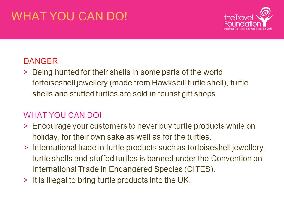 WHAT YOU CAN DO! DANGER >Being hunted for their shells in some parts of the world tortoiseshell jewellery (made from Hawksbill turtle shell), turtle s