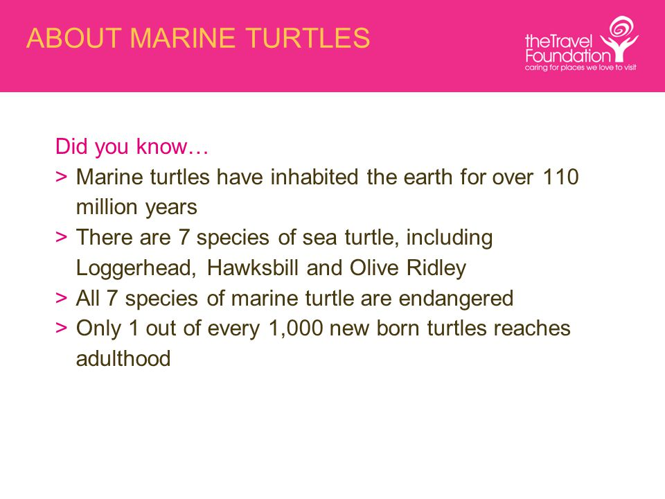 ABOUT MARINE TURTLES Did you know… >Marine turtles have inhabited the earth for over 110 million years >There are 7 species of sea turtle, including Loggerhead, Hawksbill and Olive Ridley >All 7 species of marine turtle are endangered >Only 1 out of every 1,000 new born turtles reaches adulthood