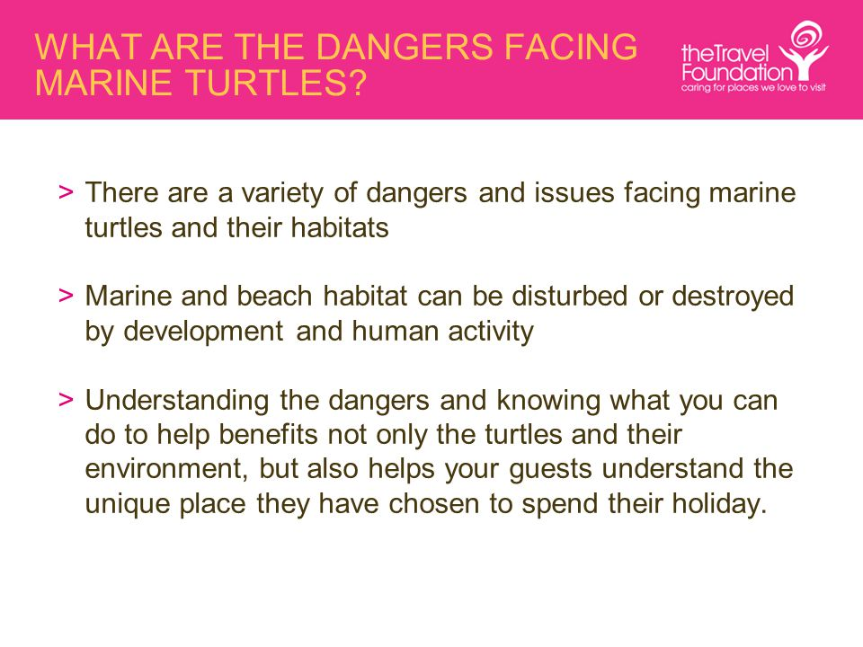 WHAT ARE THE DANGERS FACING MARINE TURTLES? >There are a variety of dangers and issues facing marine turtles and their habitats >Marine and beach habi