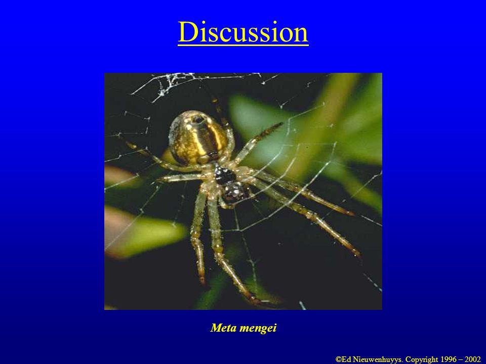 Discussion Meta mengei ©Ed Nieuwenhuyys. Copyright 1996 – 2002