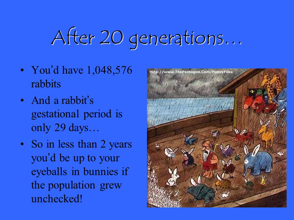 Let's calculate… If you were to start with two rabbits of opposite sex, how many rabbits would you have after 20 generations? 2 20 = ?