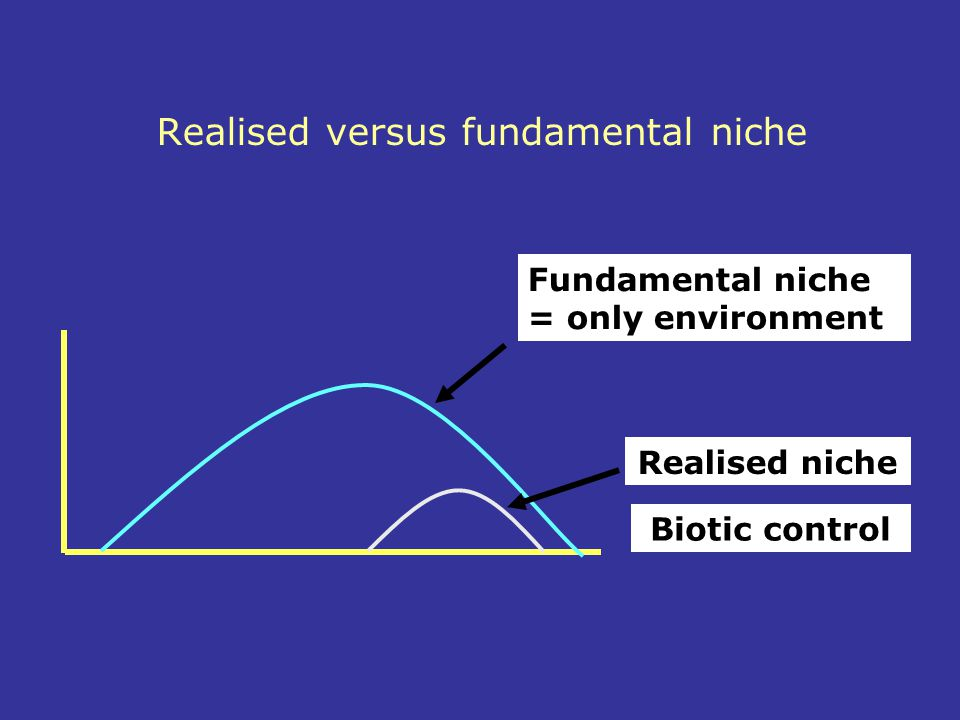 Realised versus fundamental niche Fundamental niche = only environment Realised niche Biotic control
