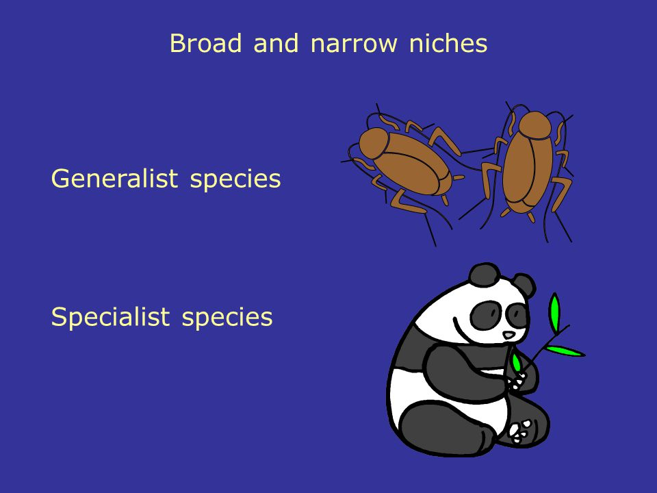 Broad and narrow niches Generalist species Specialist species