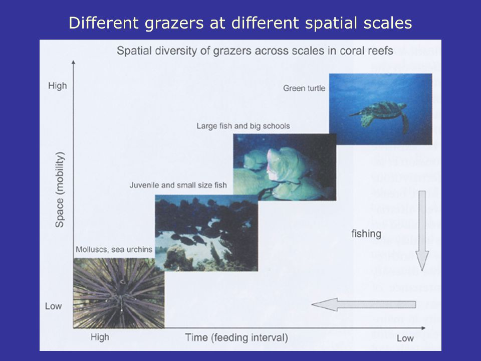 Different grazers at different spatial scales