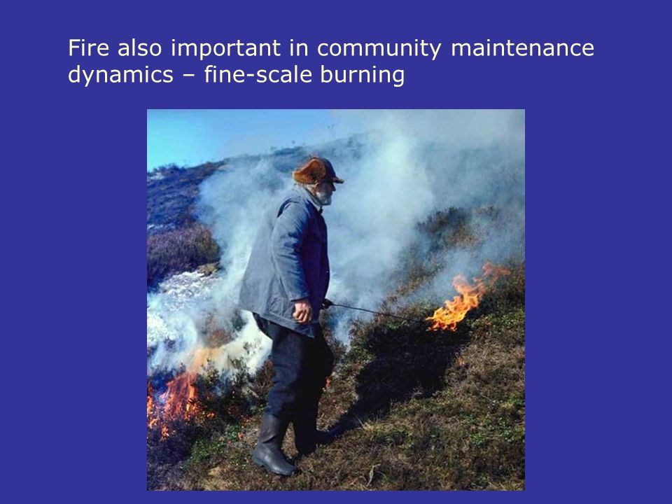 Fire also important in community maintenance dynamics – fine-scale burning
