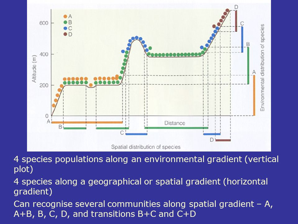 4 species populations along an environmental gradient (vertical plot) 4 species along a geographical or spatial gradient (horizontal gradient) Can rec
