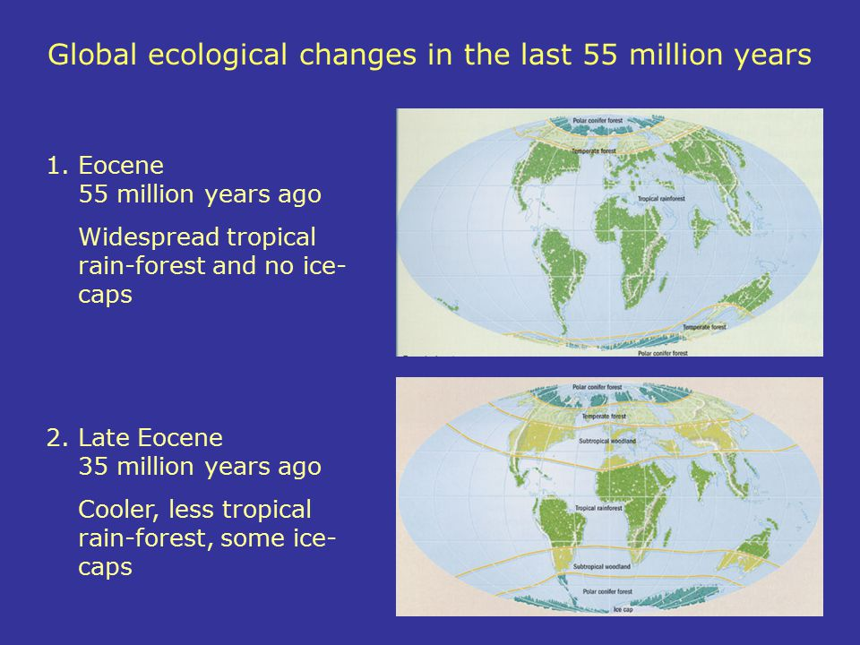 Global ecological changes in the last 55 million years 1.Eocene 55 million years ago Widespread tropical rain-forest and no ice- caps 2.Late Eocene 35
