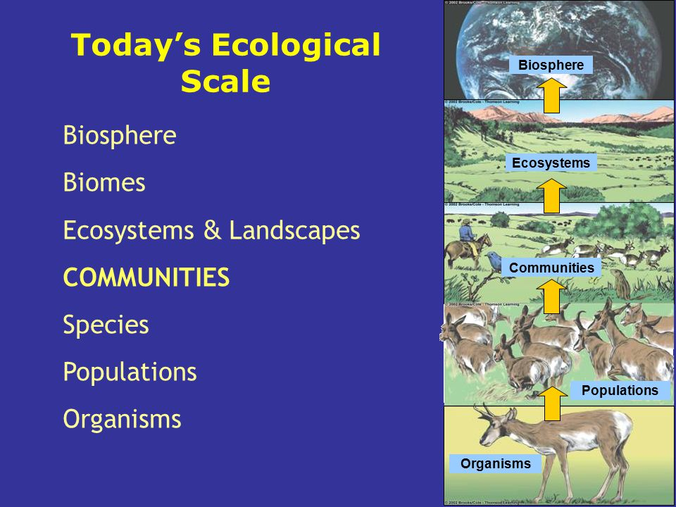Biosphere Ecosystems Communities Populations Organisms Biosphere Biomes Ecosystems & Landscapes COMMUNITIES Species Populations Organisms Today's Ecol