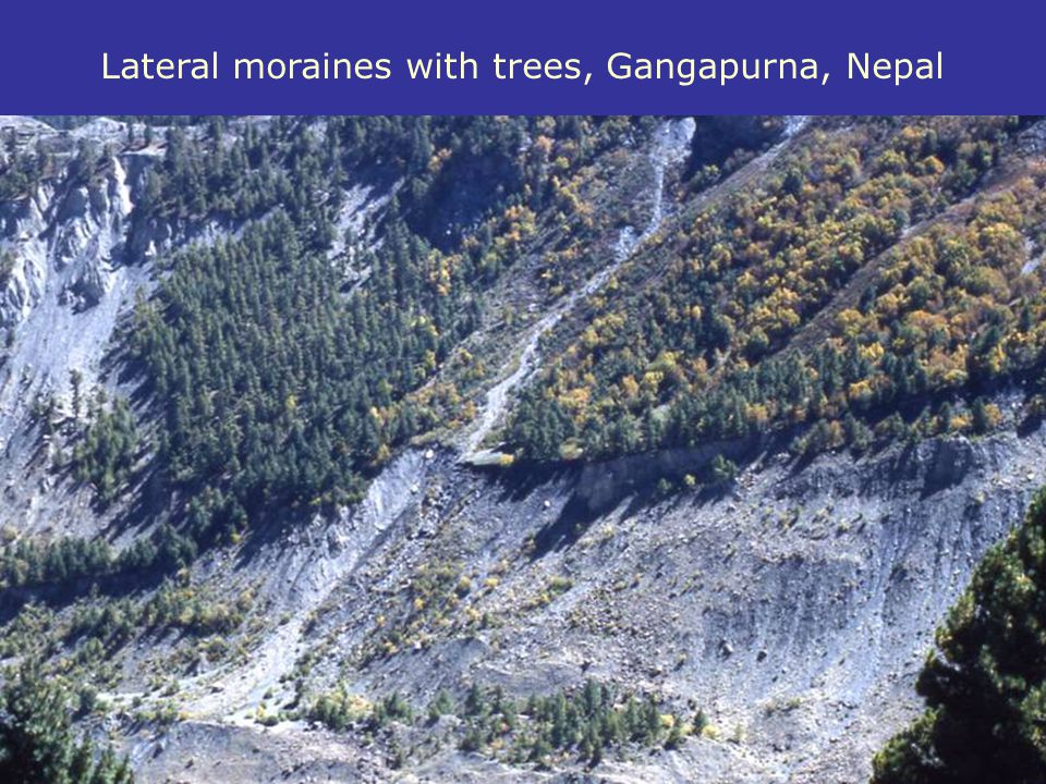 Lateral moraines with trees, Gangapurna, Nepal