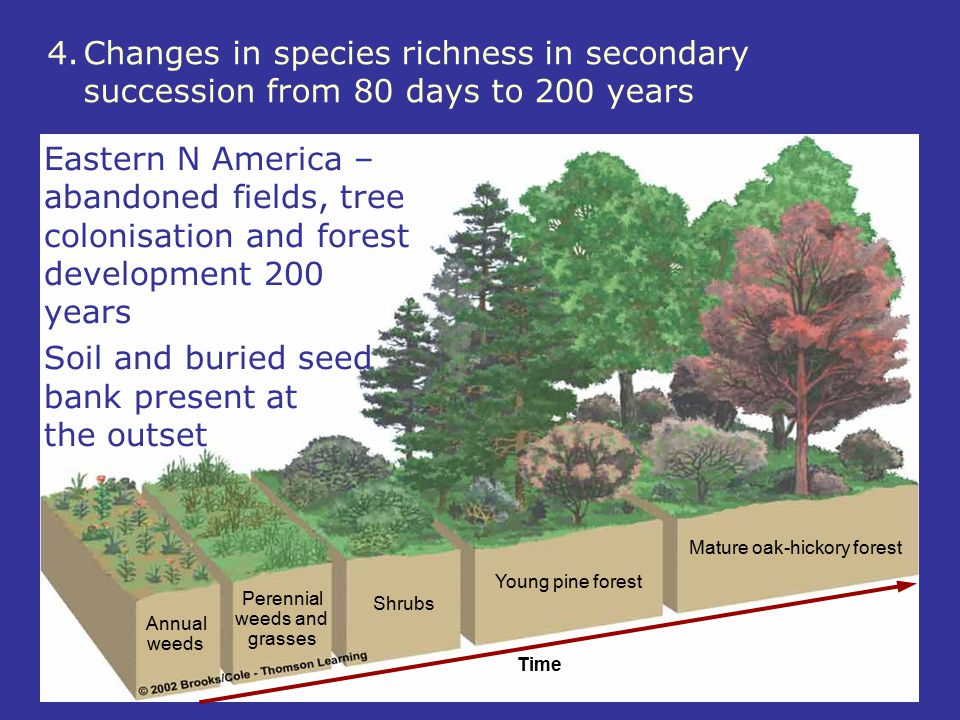 Time Annual weeds Perennial weeds and grasses Shrubs Young pine forest Mature oak-hickory forest 4.Changes in species richness in secondary succession