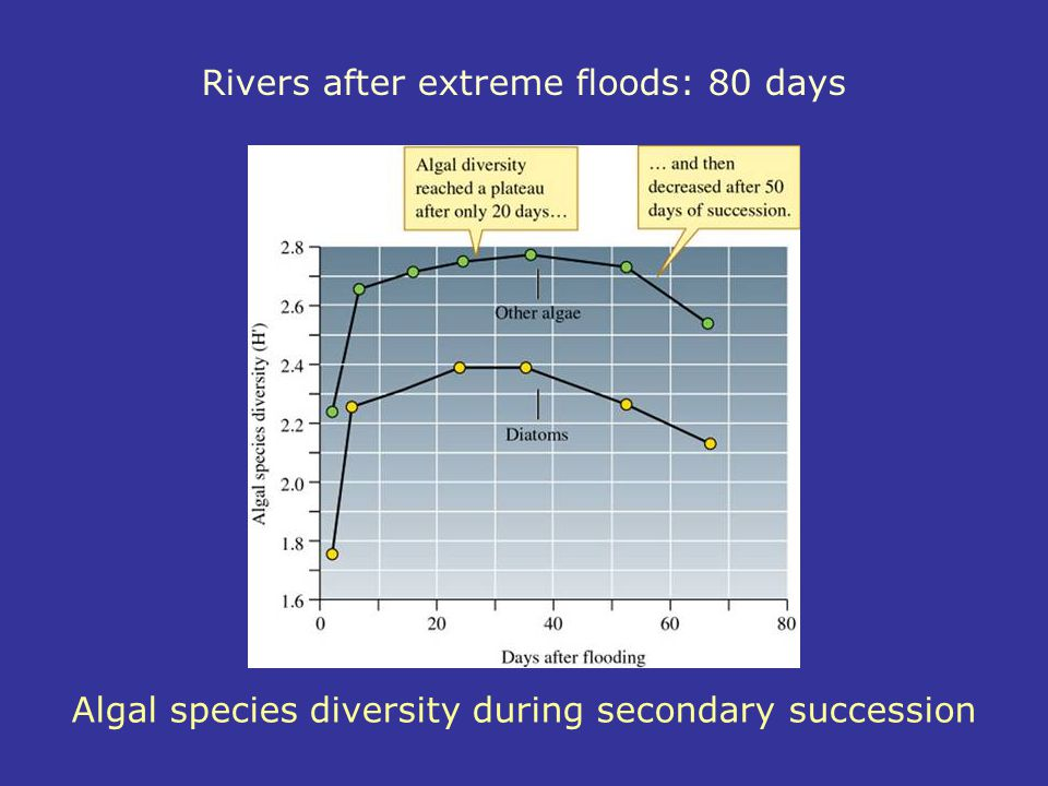 Algal species diversity during secondary succession Rivers after extreme floods: 80 days
