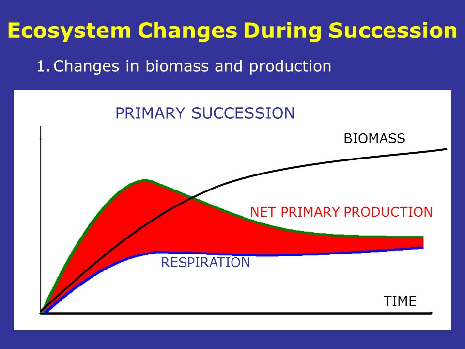 RESPIRATION NET PRIMARY PRODUCTION BIOMASS TIME Ecosystem Changes During Succession 1.Changes in biomass and production PRIMARY SUCCESSION