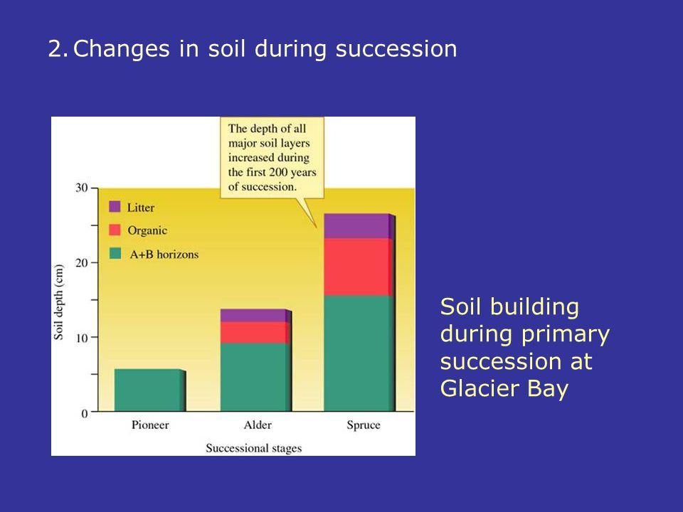 Soil building during primary succession at Glacier Bay 2.Changes in soil during succession