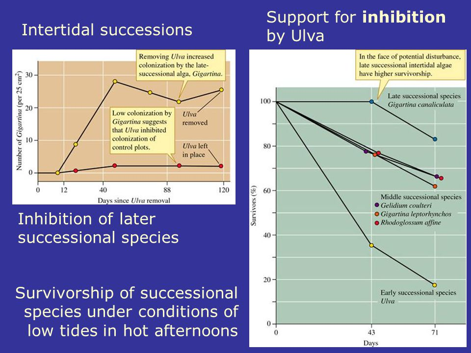 Inhibition of later successional species Survivorship of successional species under conditions of low tides in hot afternoons Intertidal successions S
