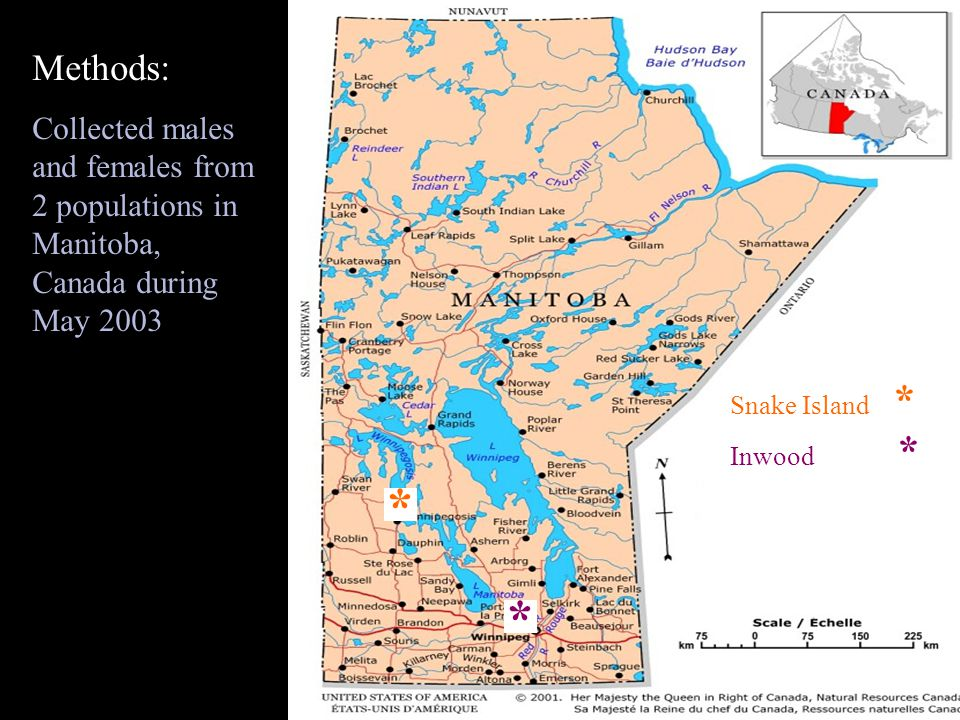 * * Snake Island * Inwood * * * Methods: Collected males and females from 2 populations in Manitoba, Canada during May 2003