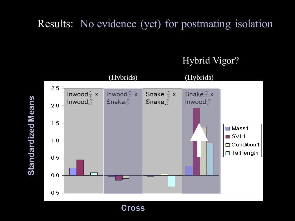 Results: No evidence (yet) for postmating isolation (Hybrids) Cross Standardized Means Inwood♀ x Inwood♂ Inwood♀ x Snake♂ Snake ♀ x Snake♂ Snake♀ x Inwood♂ (Hybrids) Hybrid Vigor?