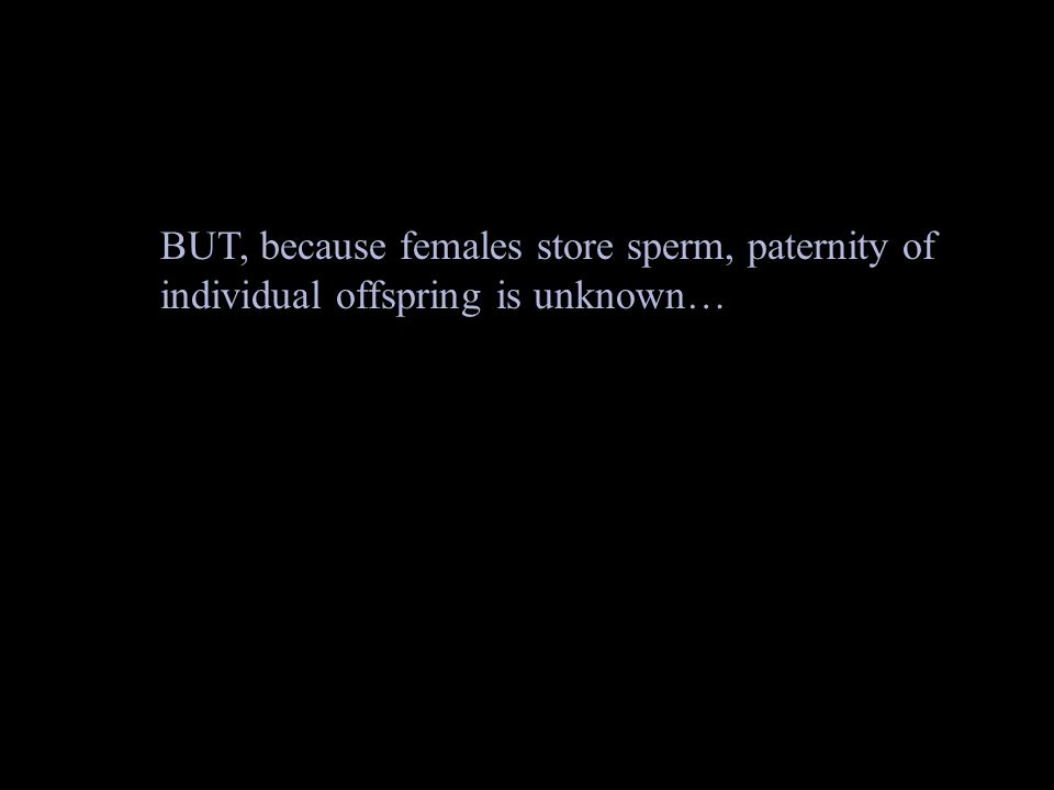 BUT, because females store sperm, paternity of individual offspring is unknown…