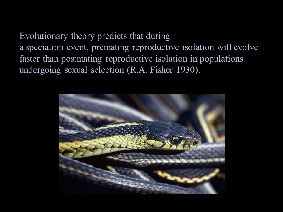premating reproductive isolation- behavior preventing individuals from mating and producing offspring.
