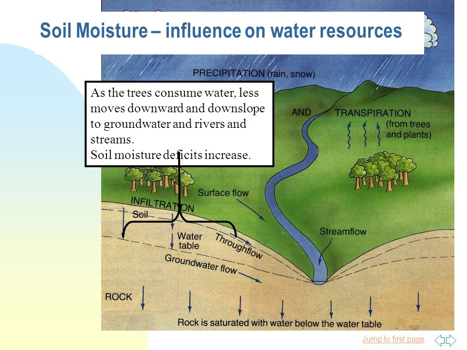 Jump to first page As the trees consume water, less moves downward and downslope to groundwater and rivers and streams.