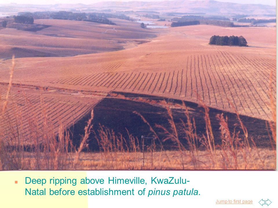 Jump to first page n Deep ripping above Himeville, KwaZulu- Natal before establishment of pinus patula.