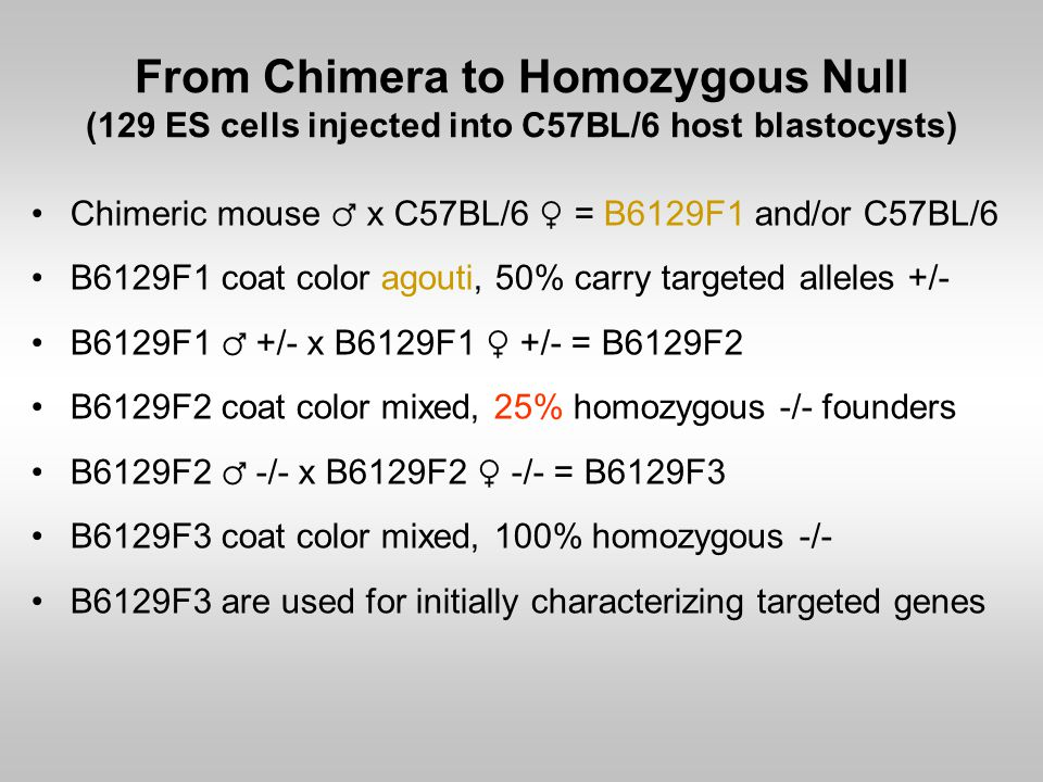 From Chimera to Homozygous Null (129 ES cells injected into C57BL/6 host blastocysts) Chimeric mouse ♂ x C57BL/6 ♀ = B6129F1 and/or C57BL/6 B6129F1 co