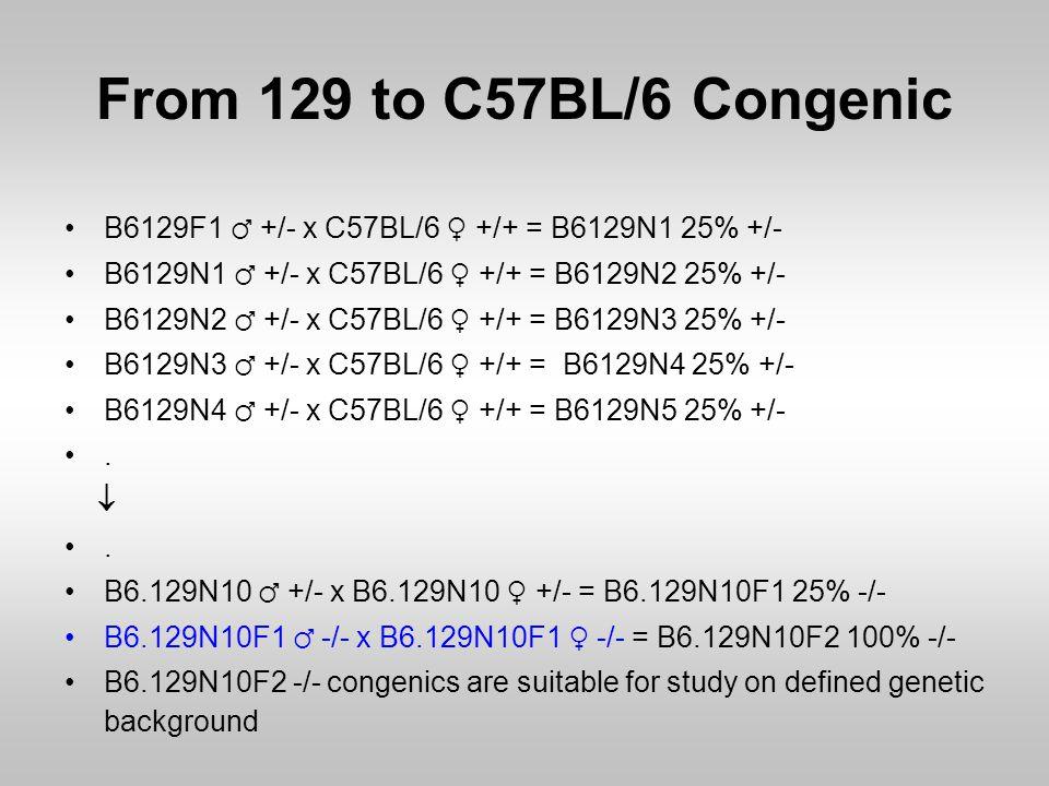 From 129 to C57BL/6 Congenic B6129F1 ♂ +/- x C57BL/6 ♀ +/+ = B6129N1 25% +/- B6129N1 ♂ +/- x C57BL/6 ♀ +/+ = B6129N2 25% +/- B6129N2 ♂ +/- x C57BL/6 ♀
