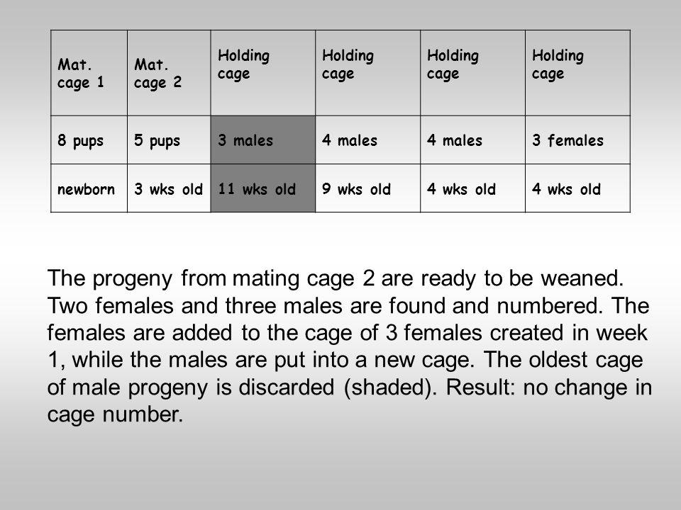 Mat. cage 1 Mat. cage 2 Holding cage Holding cage Holding cage Holding cage 8 pups5 pups3 males4 males 3 females newborn3 wks old11 wks old9 wks old4