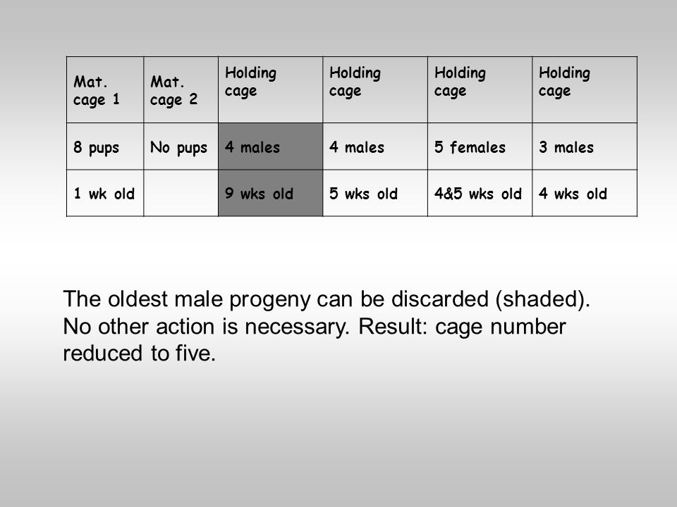 Mat. cage 1 Mat. cage 2 Holding cage Holding cage Holding cage Holding cage 8 pupsNo pups4 males 5 females3 males 1 wk old 9 wks old5 wks old4&5 wks o