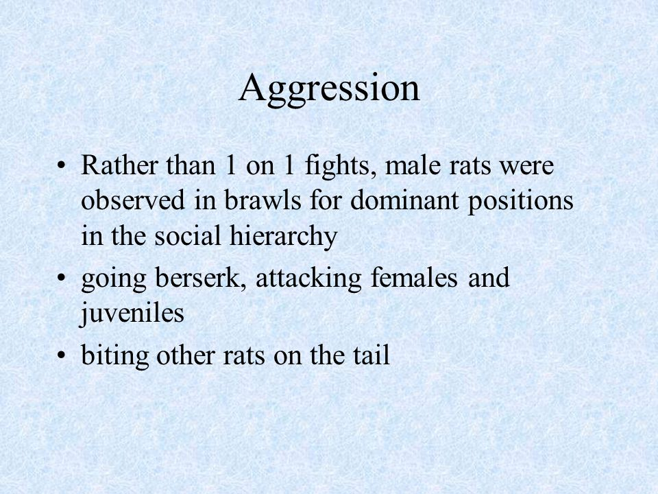 Aggression Rather than 1 on 1 fights, male rats were observed in brawls for dominant positions in the social hierarchy going berserk, attacking female