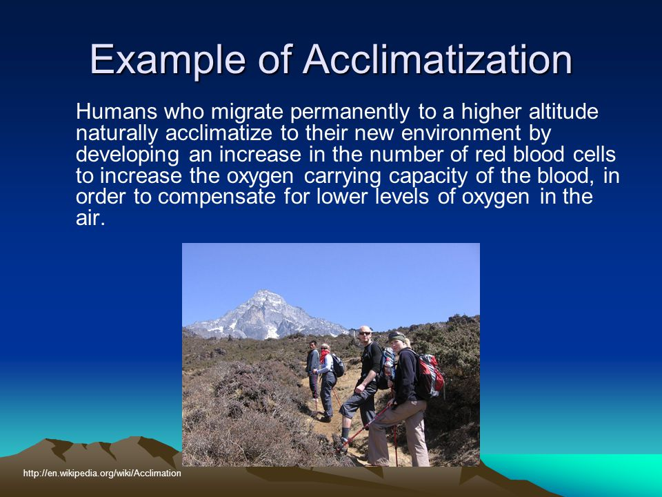 Example of Acclimatization Humans who migrate permanently to a higher altitude naturally acclimatize to their new environment by developing an increas