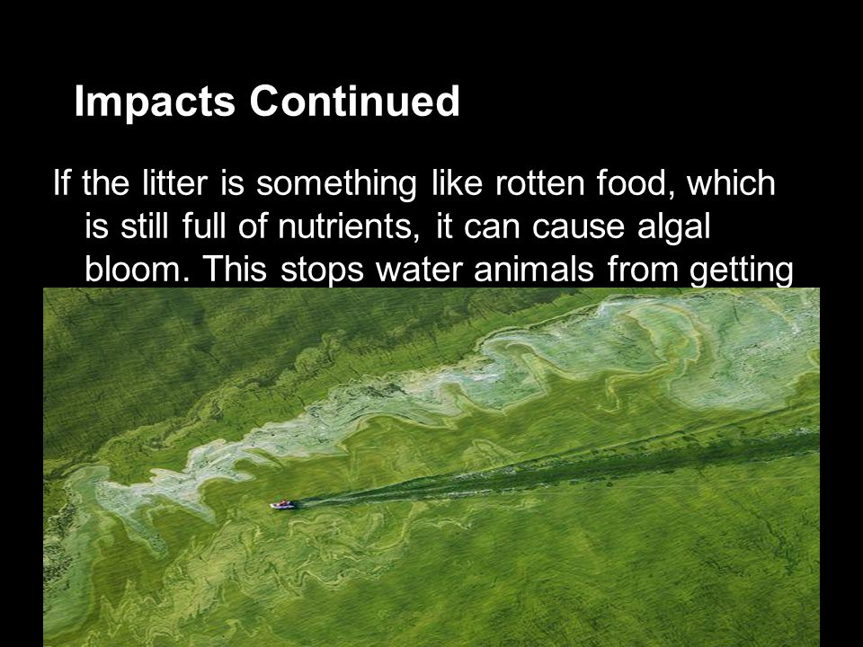 Impacts Continued If the litter is something like rotten food, which is still full of nutrients, it can cause algal bloom.