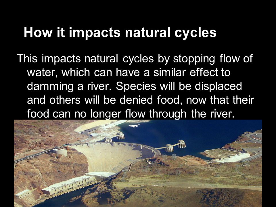 How it impacts natural cycles This impacts natural cycles by stopping flow of water, which can have a similar effect to damming a river.