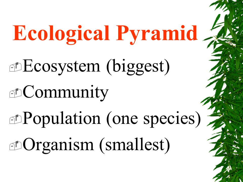 Ecological Pyramid  Ecosystem (biggest)  Community  Population (one species)  Organism (smallest)