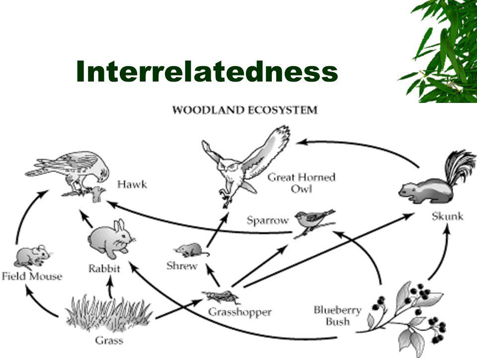 Interrelatedness
