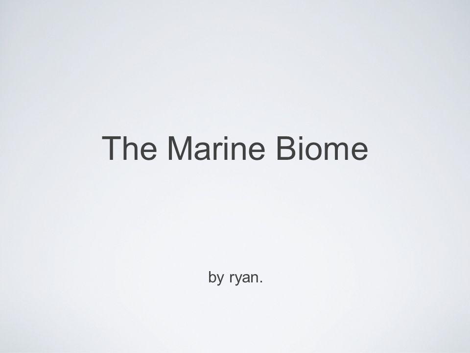 The Marine Biome by ryan.