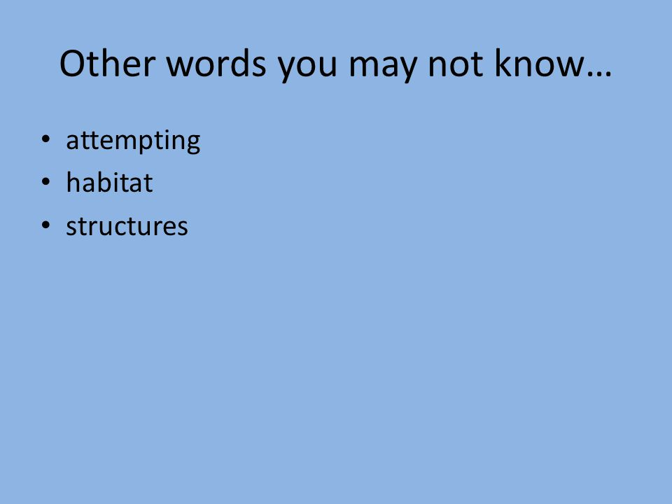Other words you may not know… attempting habitat structures