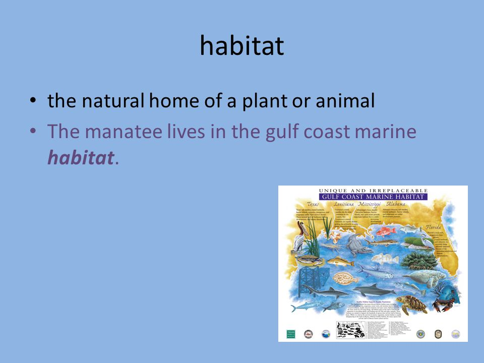habitat the natural home of a plant or animal The manatee lives in the gulf coast marine habitat.